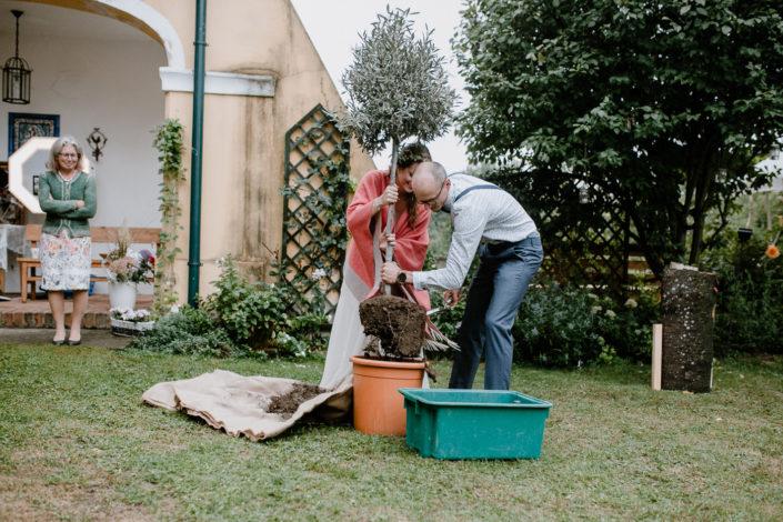 Hochzeitspaar pflanzt Olivenbaum ein